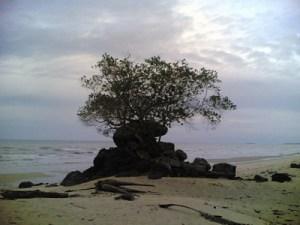 Aneh ada batu besar di tengahnya tumbuh pohon